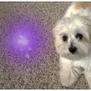 Detection of bio secretion using  UV black light torch